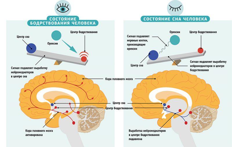 как влияет глицин на фазы сна