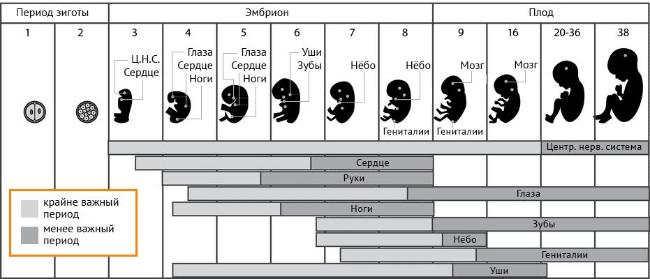 глицин во время беременности