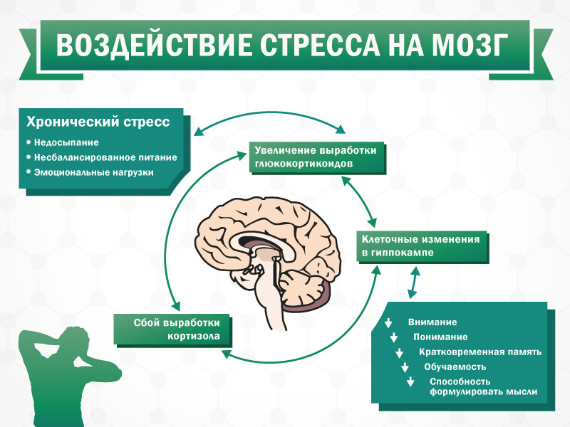 воздействие стресса на мозг