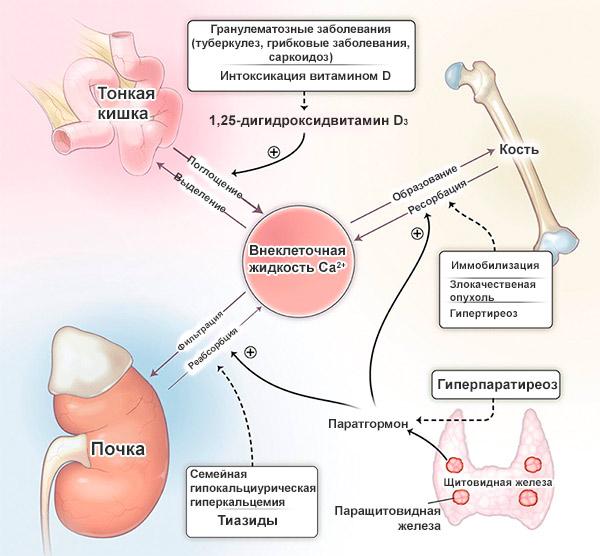причины повышенного кальция в крови у человека