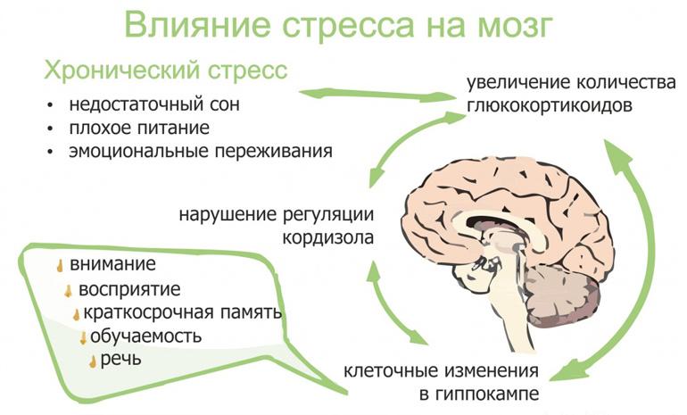 глицин при длительном стрессе