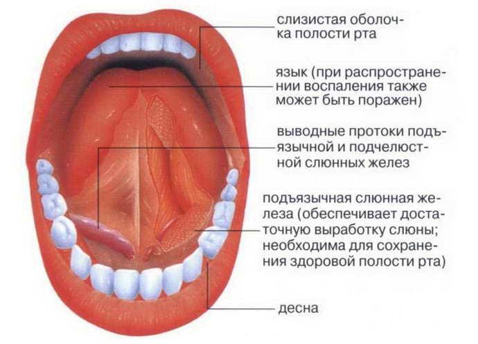 под язык